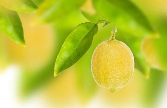 лимон (560x362, 27Kb)
