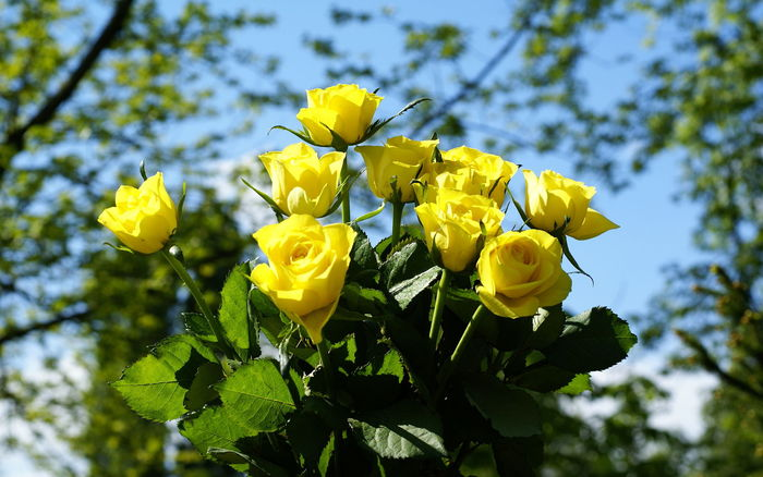 yellow-roses-bouquet-02835_high (700x438, 99Kb)
