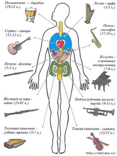 3925311_zdorove_v_kartinkah_lechenie_organizma_s_pomoshu_myz_instrymentovvremya_proslyshivaniya_instrymentov (451x600, 160Kb)