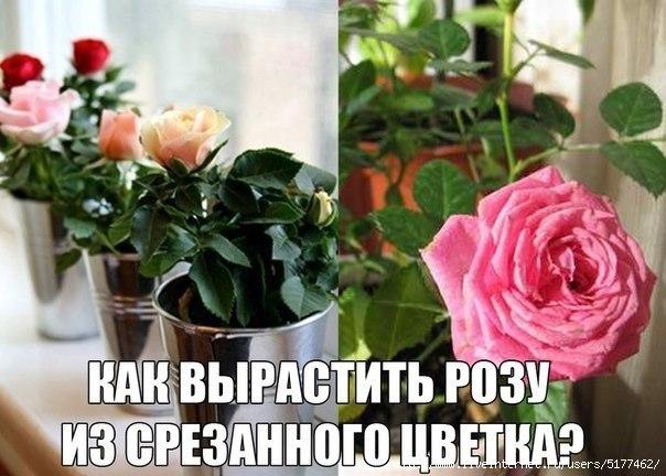 5177462_83KHKPH1uDs (604x432, 152Kb)