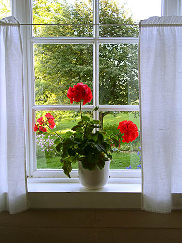 Red geranium in window at Sillegarden (375x500, 84Kb)