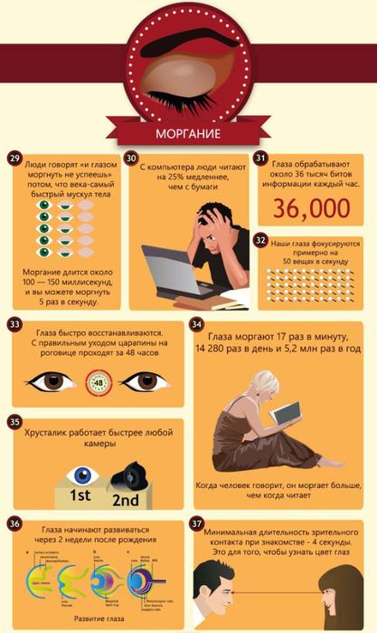 50 интересных фактов о глазах5 (417x700, 303Kb)