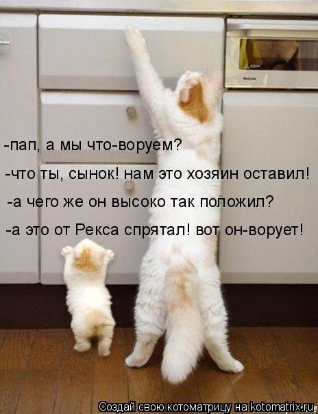 kotomatritsa_3 (464x604, 133Kb)