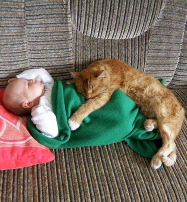Картинки про котов и детей