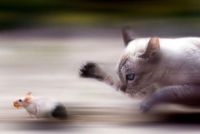 muhtesem-zamanlama-doga-fotograflari-hayvanlar-1307499 (700x471, 31Kb)
