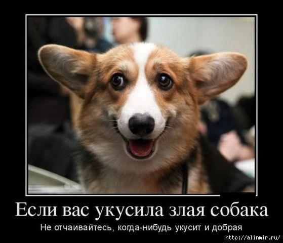 Хороший юмор для хорошего настроения 17 (559x480, 98Kb)