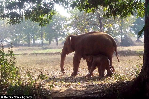История со слоненком3 (634x423, 351Kb)