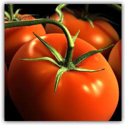 pomidori (250x250, 15Kb)