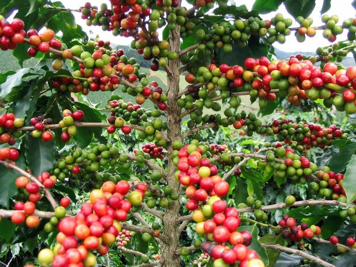 кофе1 (700x525, 553Kb)