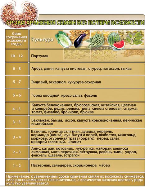 Как проверить семена помидор на всхожесть в домашних условиях