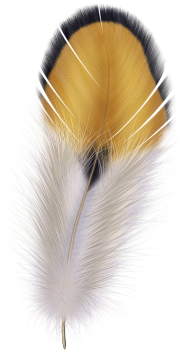 feathers (32) (372x700, 475Kb)