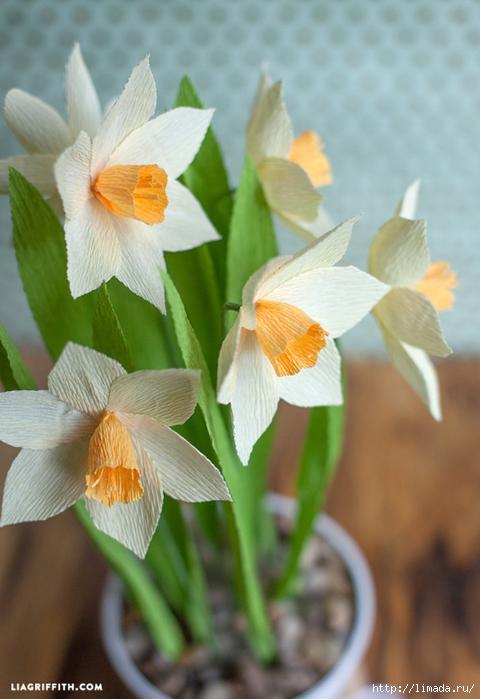 Daffodils_Crepe_Paper_DIY-560x815 (480x700, 207Kb)