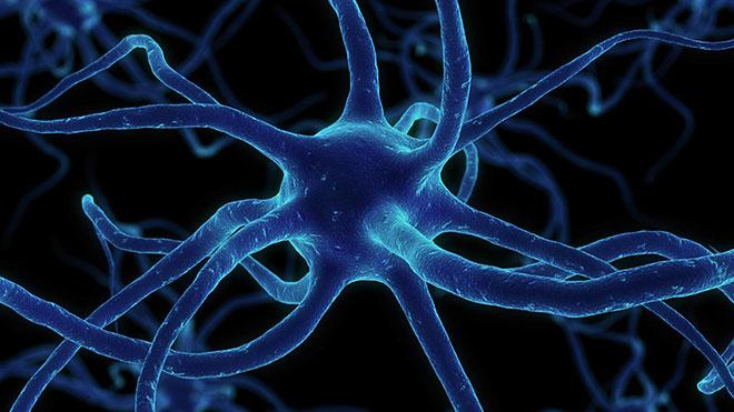 nerv (660x371, 83Kb)