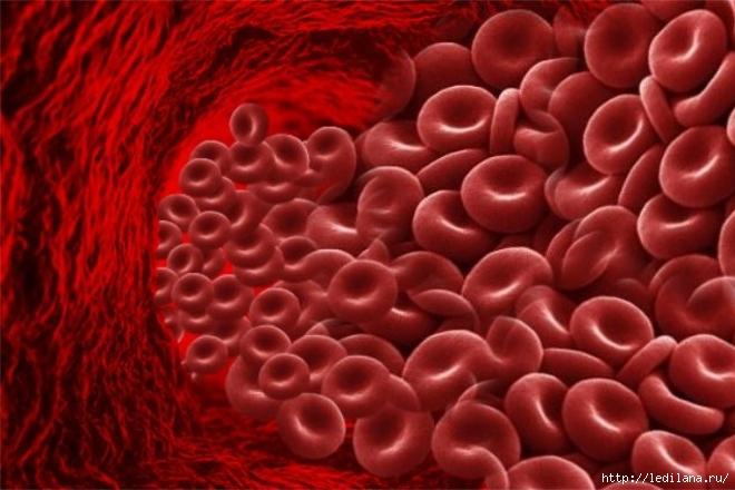 3925311_gemoglobin (660x440, 199Kb)