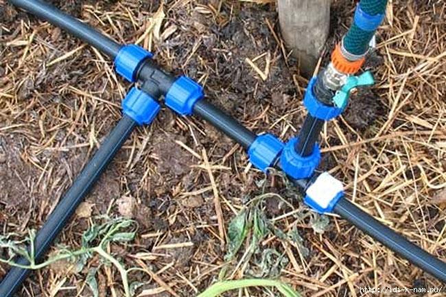 совместные посадки на огороде, как сделать летний водопровод на даче, как совместно садить овощи на даче, совместимость огородных культур, какие овощи полезно садить вместе, какие овощи нужно садить рядом, /4682845_dbe6698f6c06eee2f3454e2a1d0a852e (650x433, 268Kb)