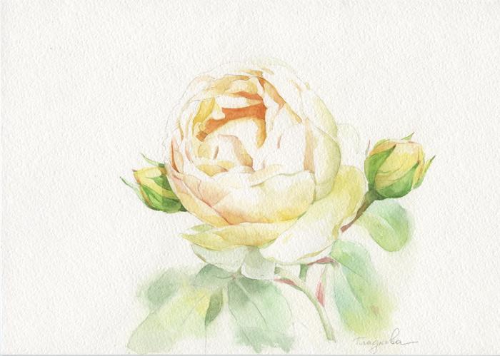 Роза 72 (700x499, 298Kb)
