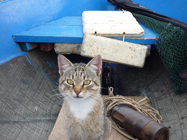 Кот выпрашивает рыбу