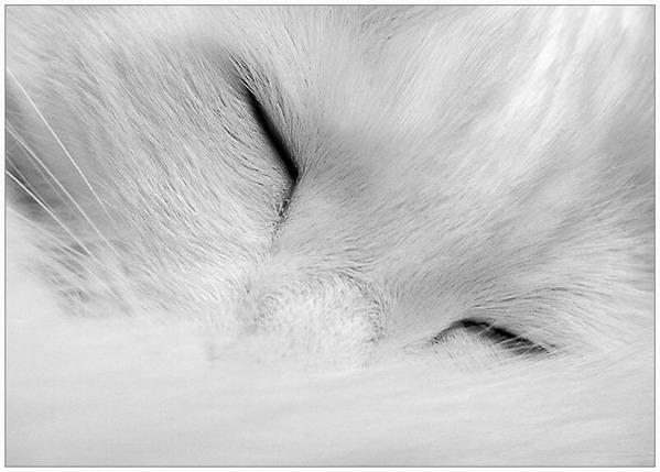Мудрые кошки))