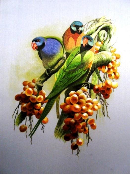 картины птиц - Лучшие схемы в быту.