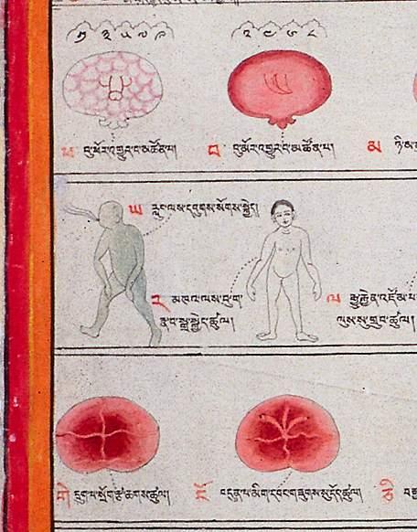 Дыхание человека рисунок органов