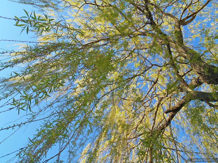 Борис Заходер - Почему деревья не ходят.  Почему? - сказал Зайчонок, И Зайчиха-мать вздохнула.