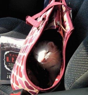 в женской сумочке найдется все... - вещи, женщины. в женской сумочке...