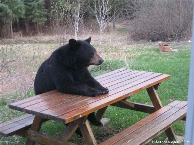 Медведь съел мой завтрак