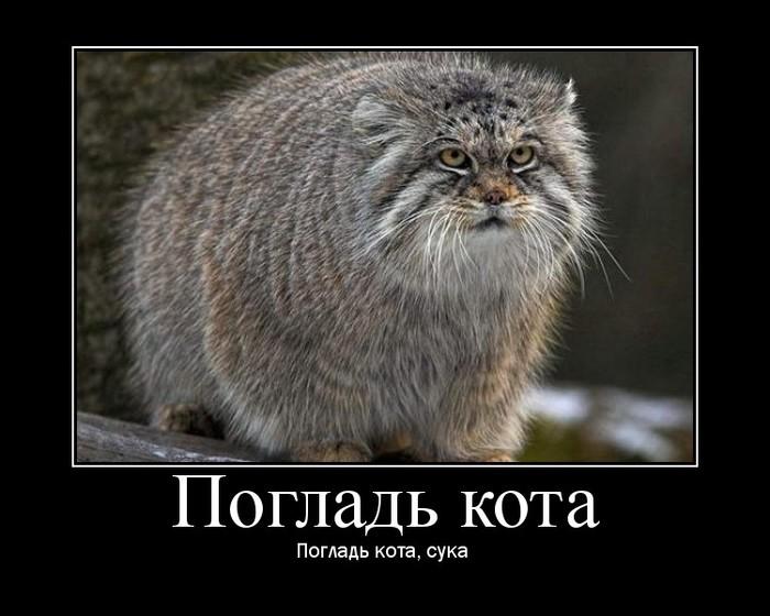 http://img0.liveinternet.ru/images/attach/c/0/34/2/34002109_0_1c8f8_21277a1d_orig.jpg