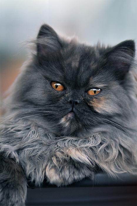 Красивые кошки мира фото красивые
