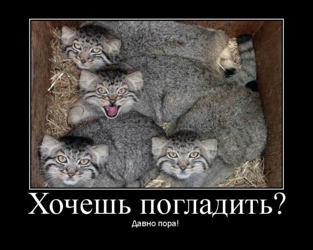 http://img0.liveinternet.ru/images/attach/c/0/34/464/34464676_20010.jpg
