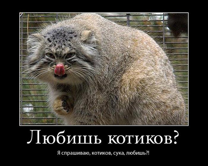 http://img0.liveinternet.ru/images/attach/c/0/34/623/34623904_lyubish_kotikov.jpg