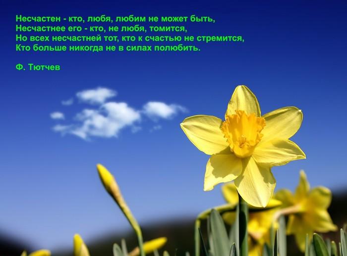 http://img0.liveinternet.ru/images/attach/c/0/34/832/34832133_Narciss.jpg