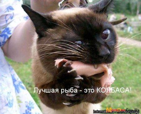 Ржачные коты видео
