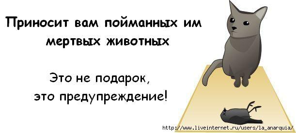 1226662376_cat_05 (611x275, 20Kb)