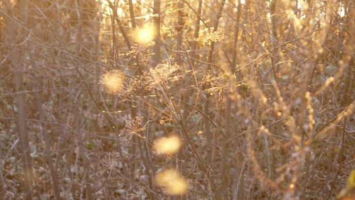 http://img0.liveinternet.ru/images/attach/c/0/35/317/35317989_P1020204bb.jpg