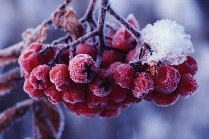 Наступила зима, тихо падает снег, На ладонях
