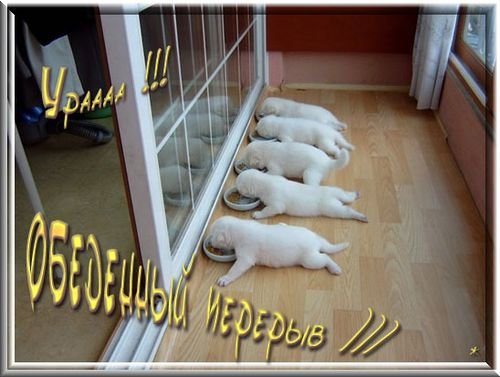 http://img0.liveinternet.ru/images/attach/c/0/35/872/35872849_a504c9763450.jpg