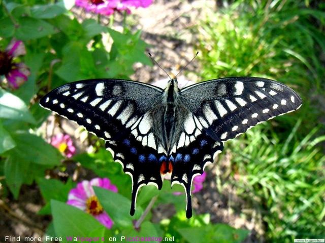 Обои - Серый - Серая бабочка.