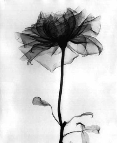 скачать через торрент черный цветок - фото 3