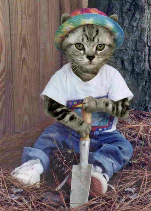 онлайн фото кошек