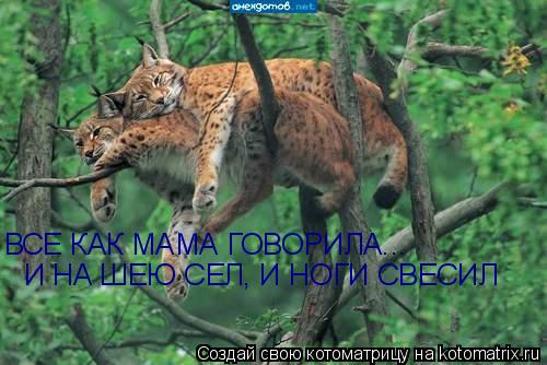 http://img0.liveinternet.ru/images/attach/c/0/36/545/36545165_kotomatr_4.jpg