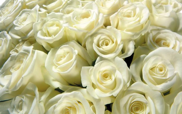 http://img0.liveinternet.ru/images/attach/c/0/36/556/36556713_1920flower_1_66.jpg