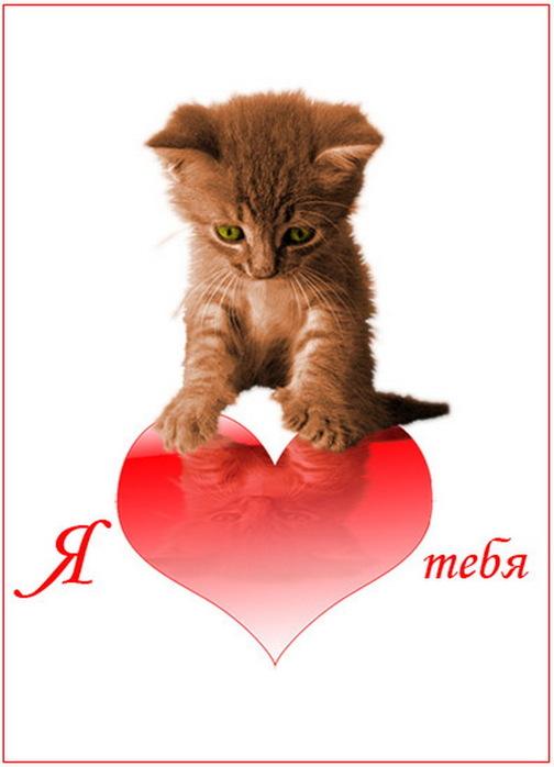 Котик я тебя люблю открытка 38