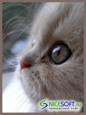 1229201015_1189512871_cats_001 (299x400, 24Kb)