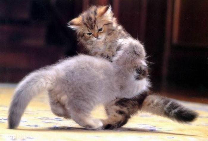 Обложка Кошки психопаты прикол