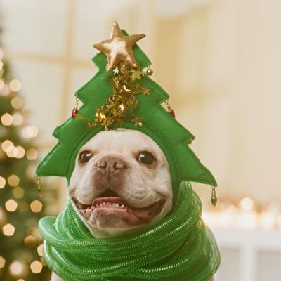 Новый год: людям праздник, зверям стресс