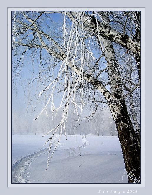 Новая зимняя резина купить в москве