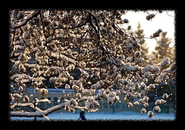 http://img0.liveinternet.ru/images/attach/c/0/37/866/37866509_1231442288_winter.jpg