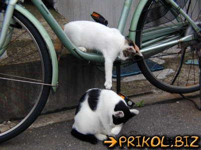 смотреть приколы про кошек картинки: