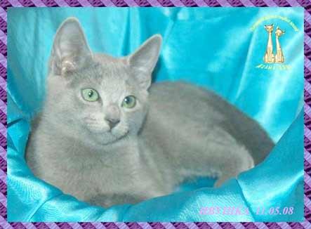 Лучше действительно котенка подарите, например, русскую голубую кошку.
